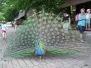 Noc snů aneb Večer plný zážitků v Zoo Brno